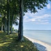 Beach and Forest Rytzebæk Møn Denmark