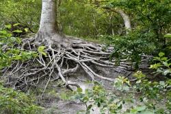 Roots Møns Klint