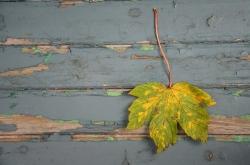 Single Leave Fall