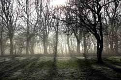 Black trees on a hazy day