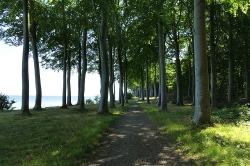 Rytzebæk Møn Beach forest