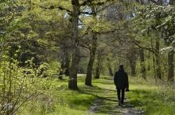 Springtime Kongelunden forest Denmark