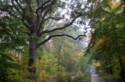 Kongelunden forest Denmark